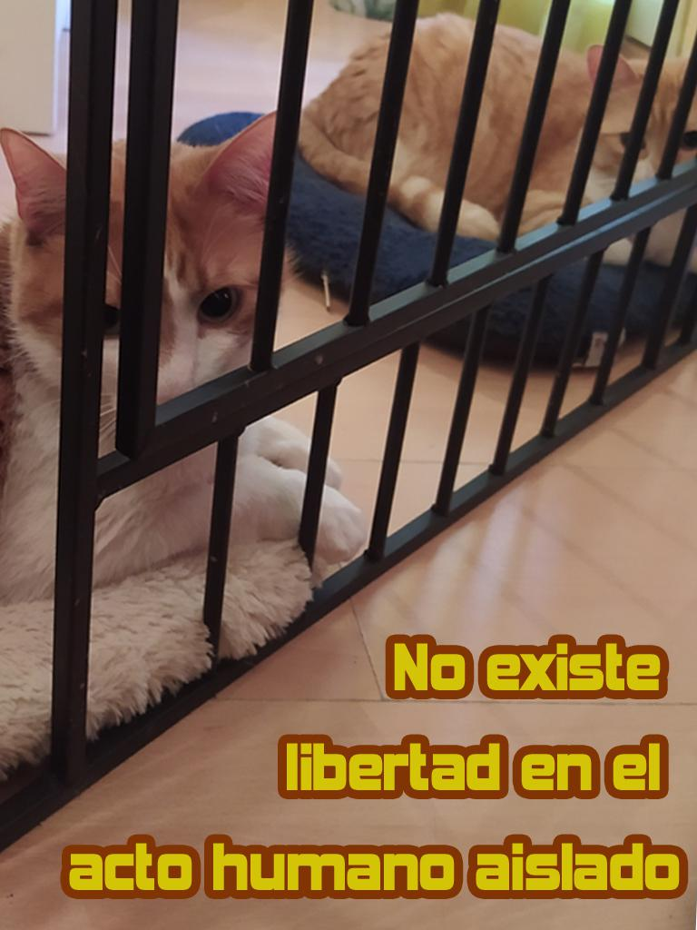 1no existe libertad copia